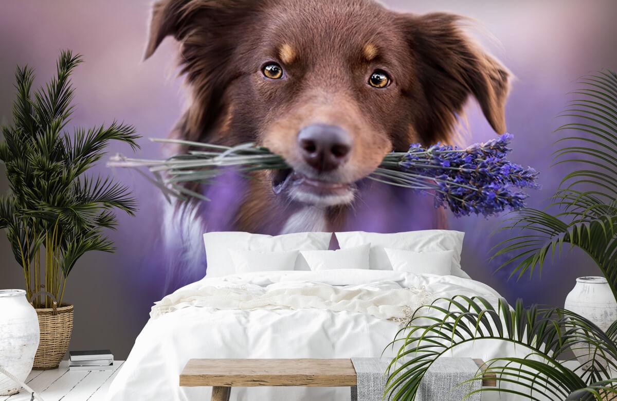 Bloemen, planten en bomen Hond met lavendel 6