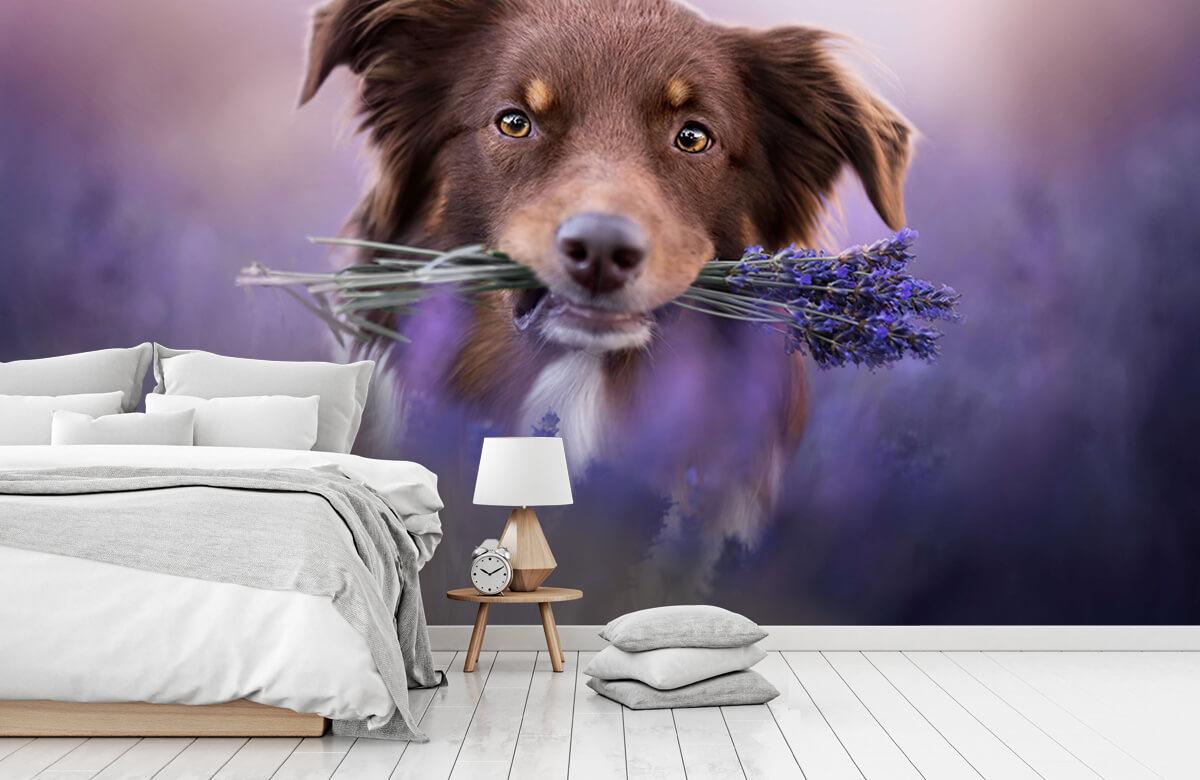Bloemen, planten en bomen Hond met lavendel 7