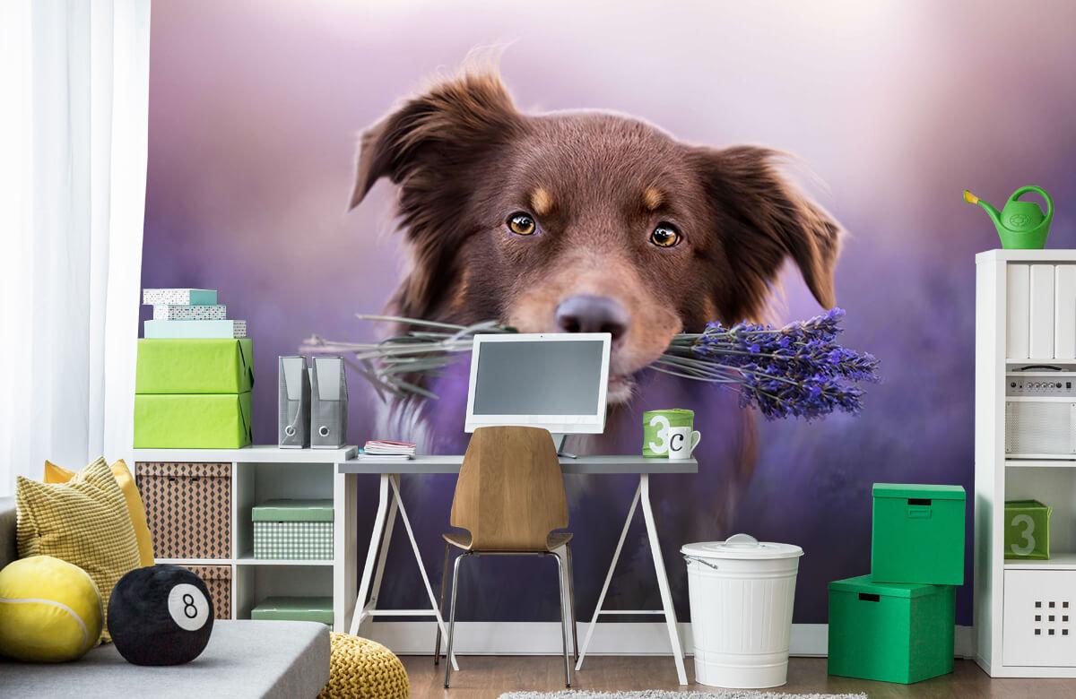 Bloemen, planten en bomen Hond met lavendel 9
