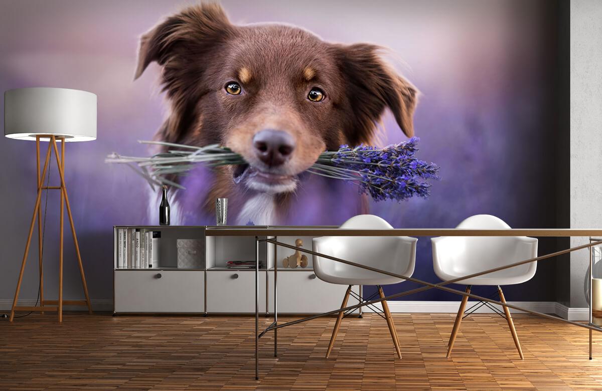 Bloemen, planten en bomen Hond met lavendel 11