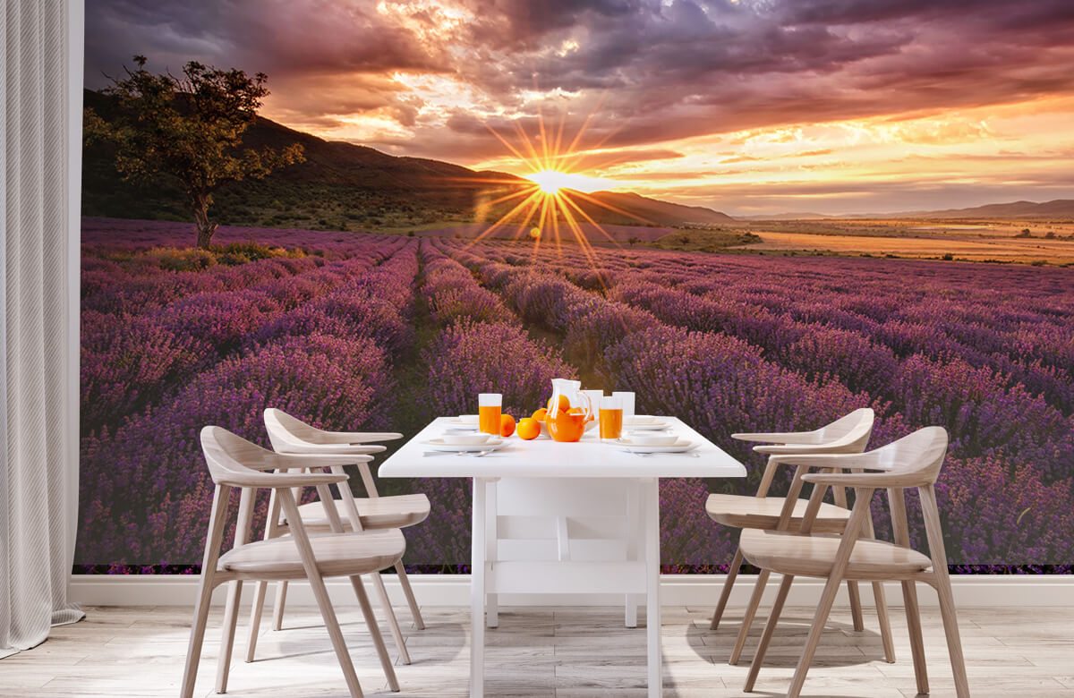 Bloemen, planten en bomen Lavendel onder de zon 2