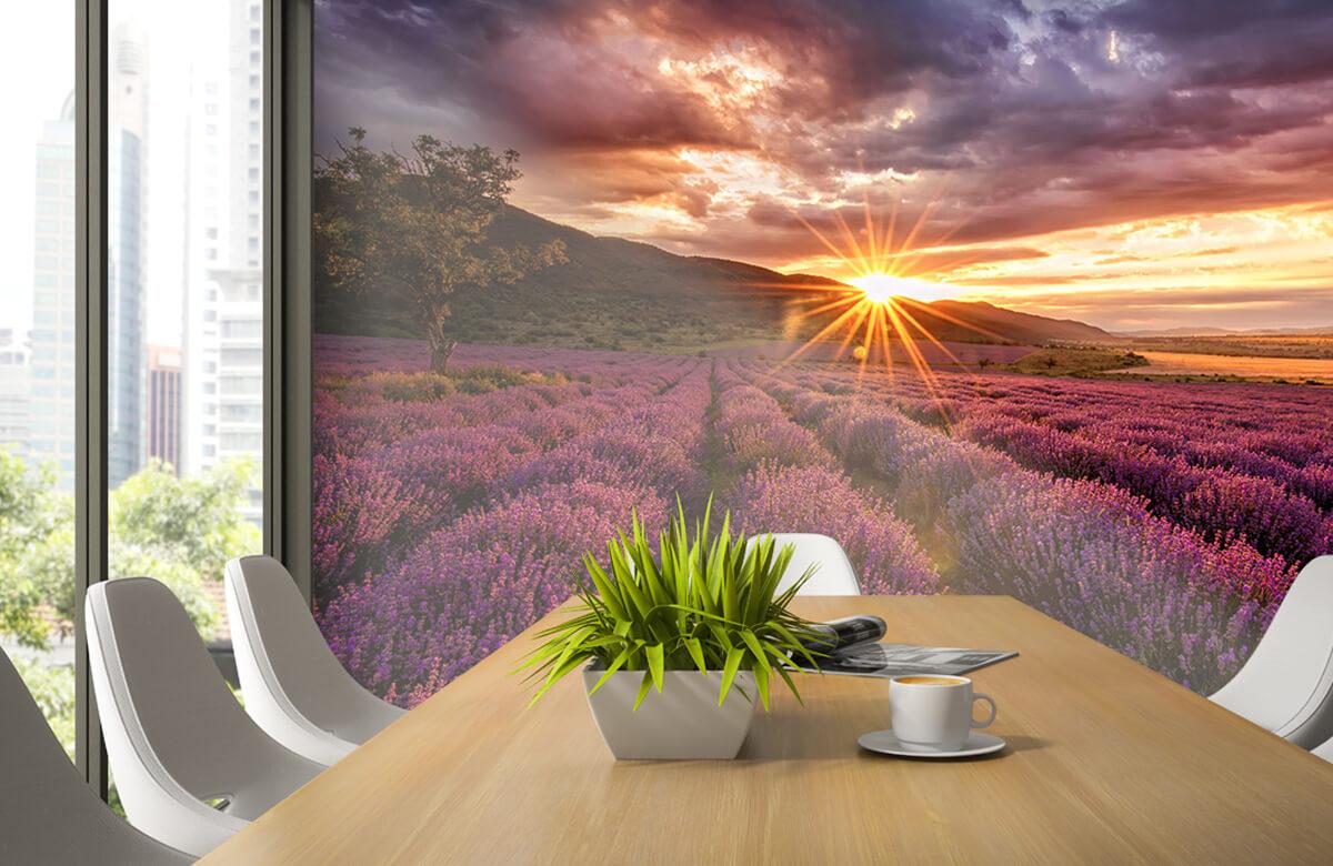 Bloemen, planten en bomen Lavendel onder de zon 3