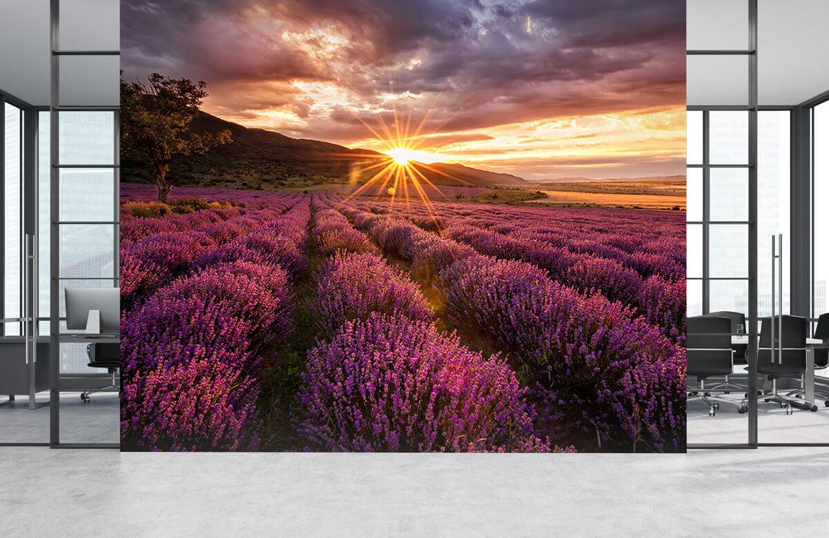 Bloemen, planten en bomen Lavendel onder de zon 4