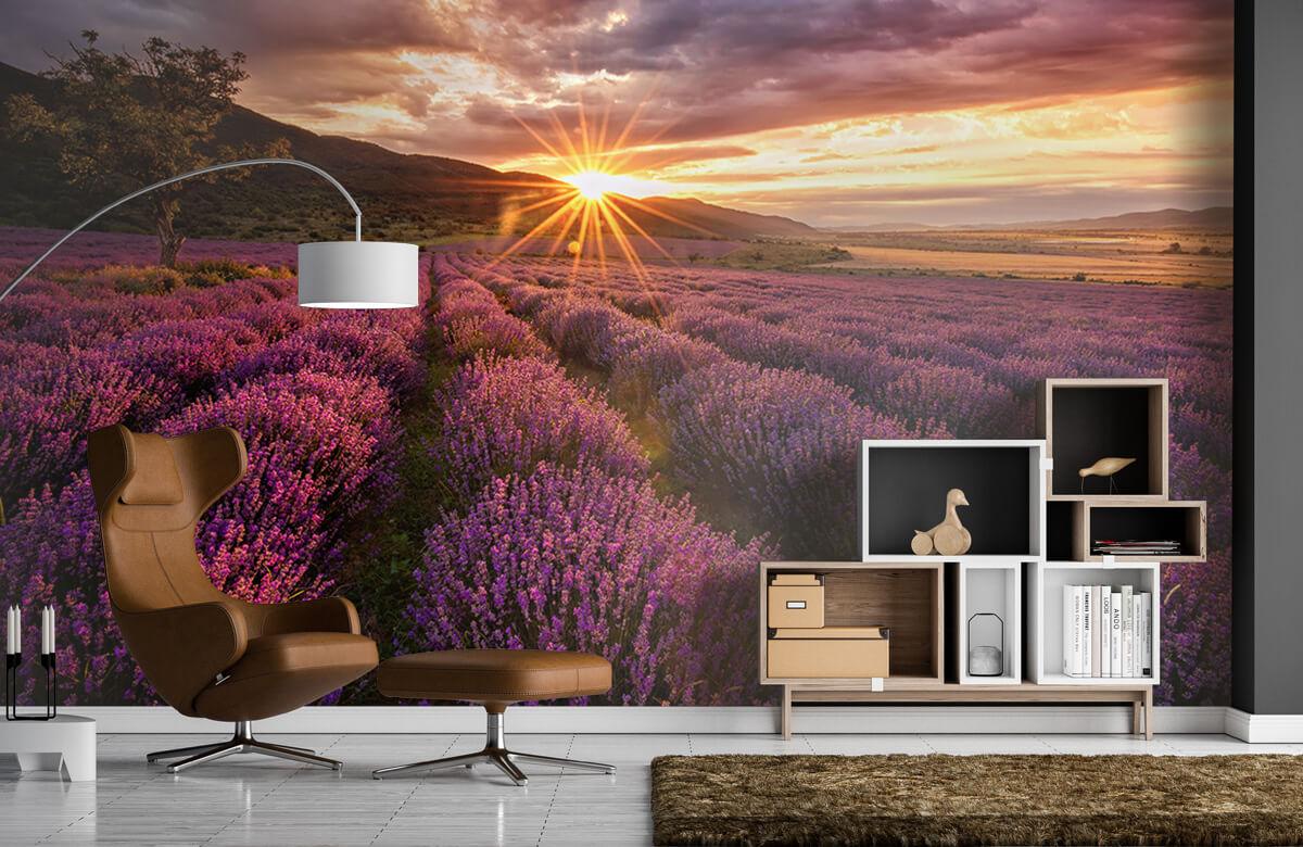 Bloemen, planten en bomen Lavendel onder de zon 5