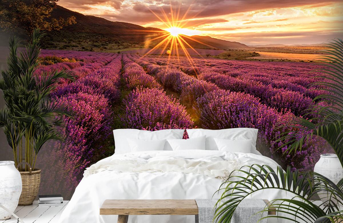 Bloemen, planten en bomen Lavendel onder de zon 1