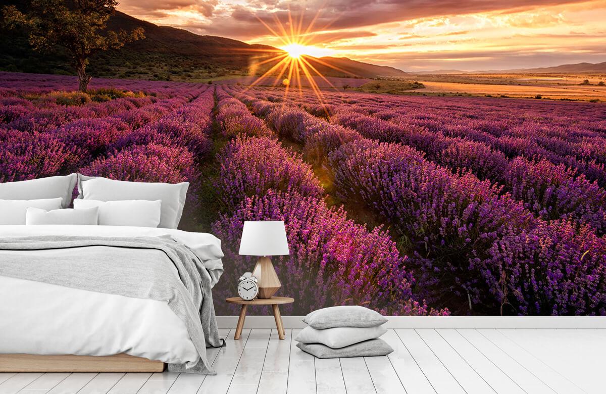 Bloemen, planten en bomen Lavendel onder de zon 7