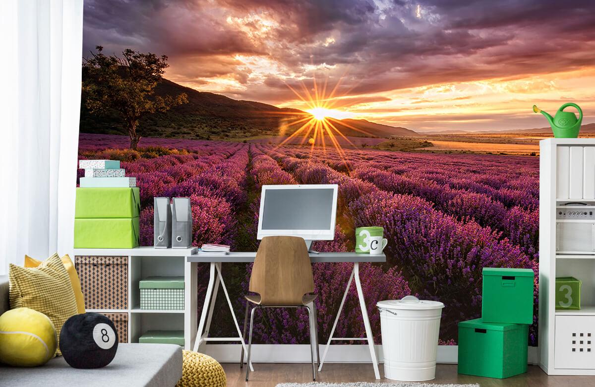 Bloemen, planten en bomen Lavendel onder de zon 9
