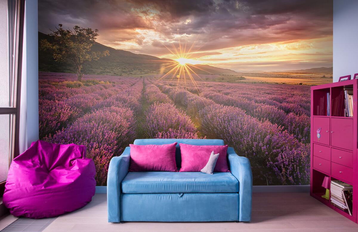Bloemen, planten en bomen Lavendel onder de zon 10