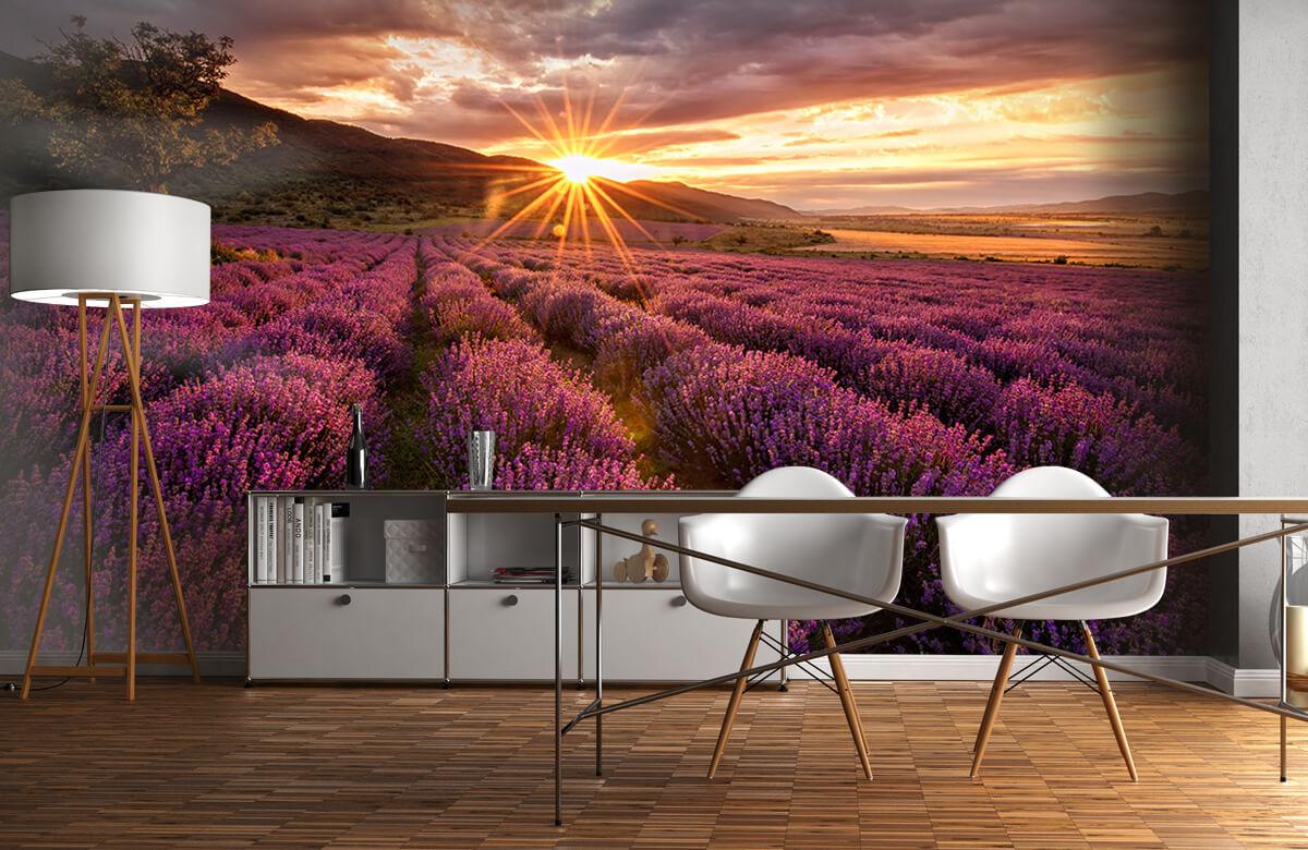 Bloemen, planten en bomen Lavendel onder de zon 11
