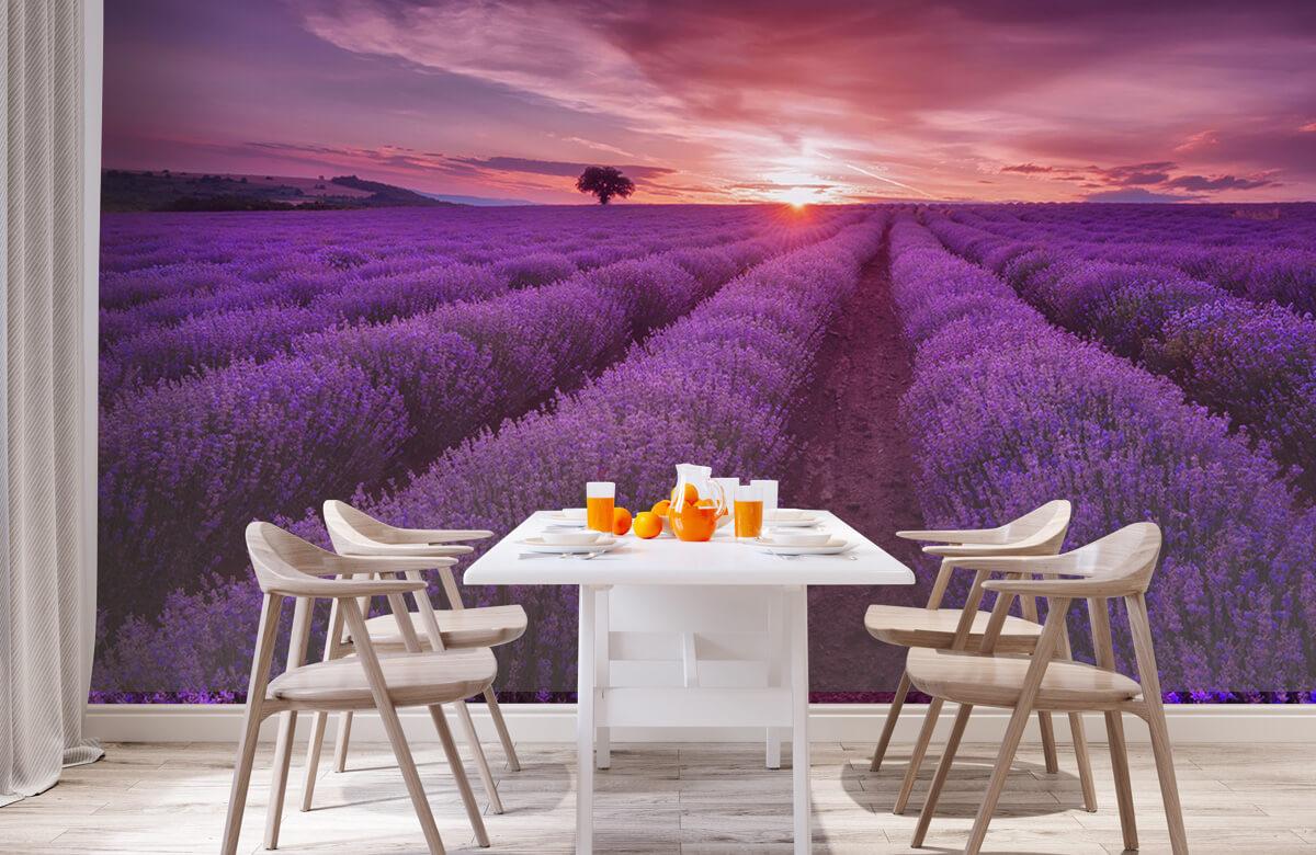 Bloemen, planten en bomen Veld vol lavendel 2