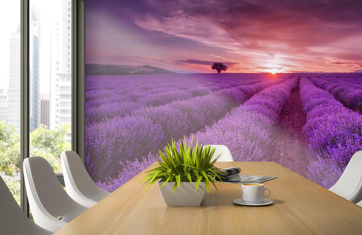 Bloemen, planten en bomen Veld vol lavendel 3