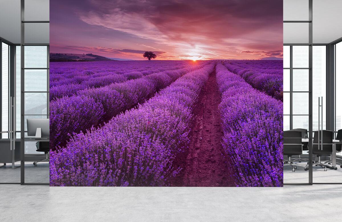 Bloemen, planten en bomen Veld vol lavendel 4