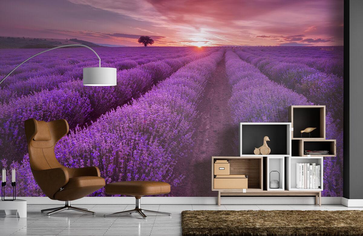 Bloemen, planten en bomen Veld vol lavendel 5
