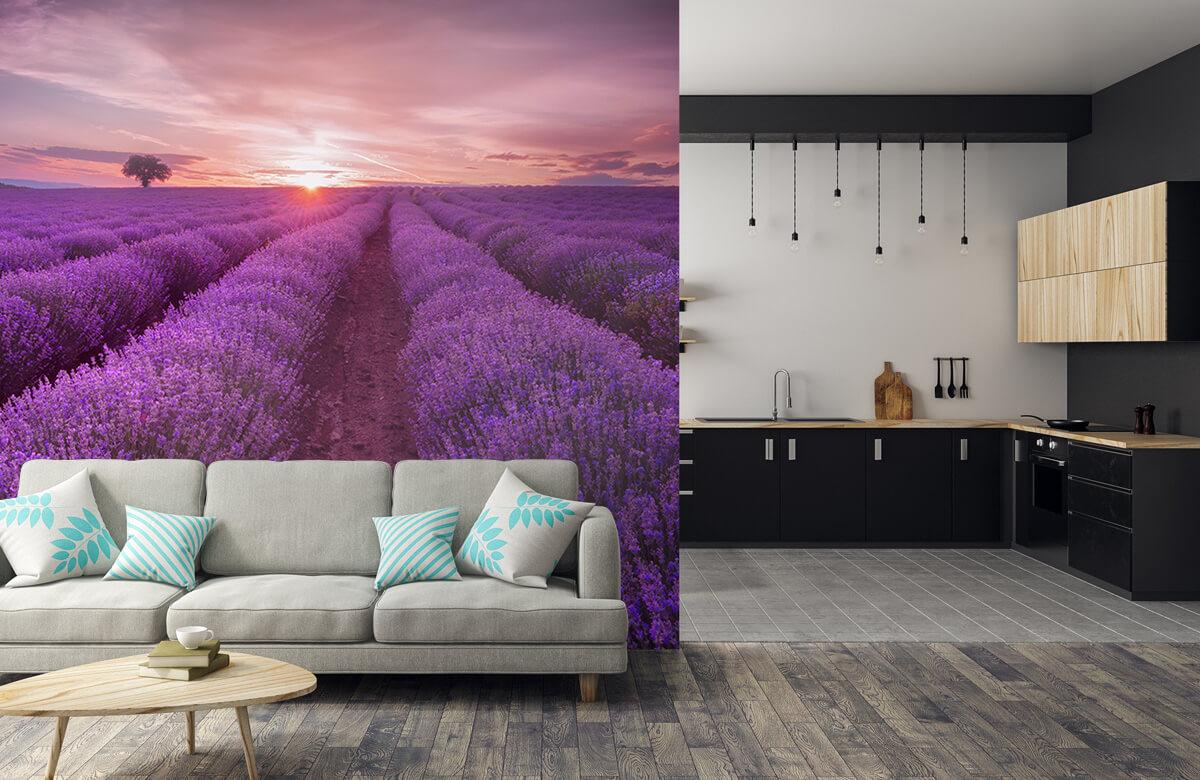 Bloemen, planten en bomen Veld vol lavendel 6