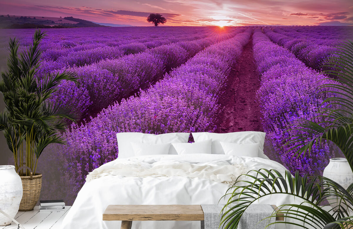 Bloemen, planten en bomen Veld vol lavendel 7