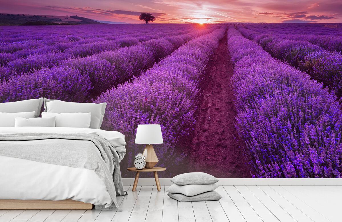 Bloemen, planten en bomen Veld vol lavendel 8