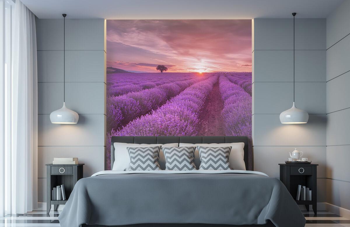 Bloemen, planten en bomen Veld vol lavendel 9