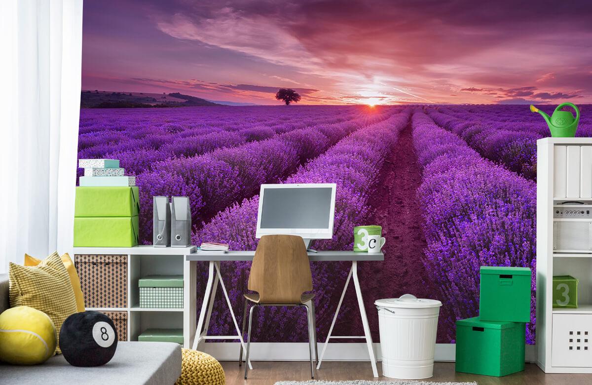Bloemen, planten en bomen Veld vol lavendel 10