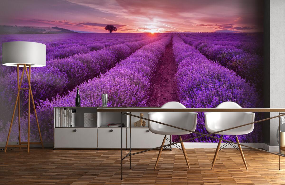 Bloemen, planten en bomen Veld vol lavendel 1
