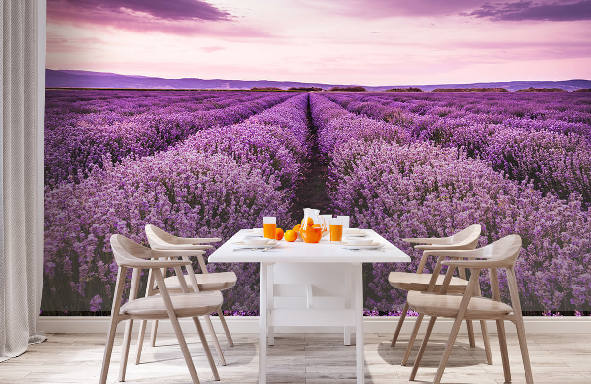 Bloemen, planten en bomen Lavendelstruiken 2