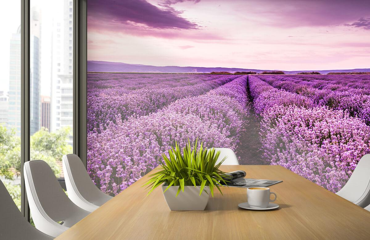Bloemen, planten en bomen Lavendelstruiken 3