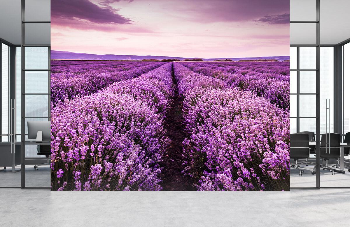 Bloemen, planten en bomen Lavendelstruiken 1
