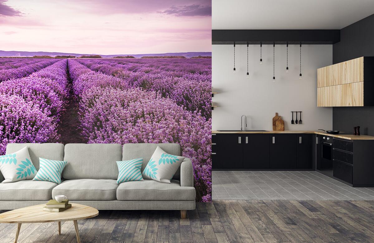 Bloemen, planten en bomen Lavendelstruiken 5