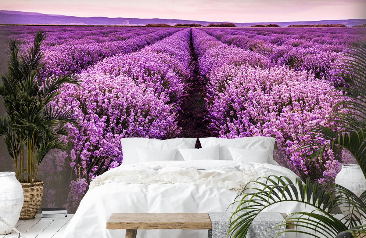 Bloemen, planten en bomen Lavendelstruiken 6