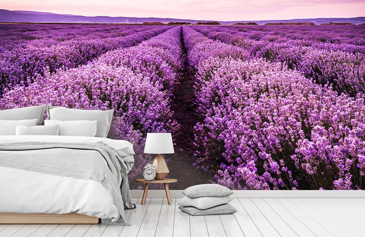Bloemen, planten en bomen Lavendelstruiken 7