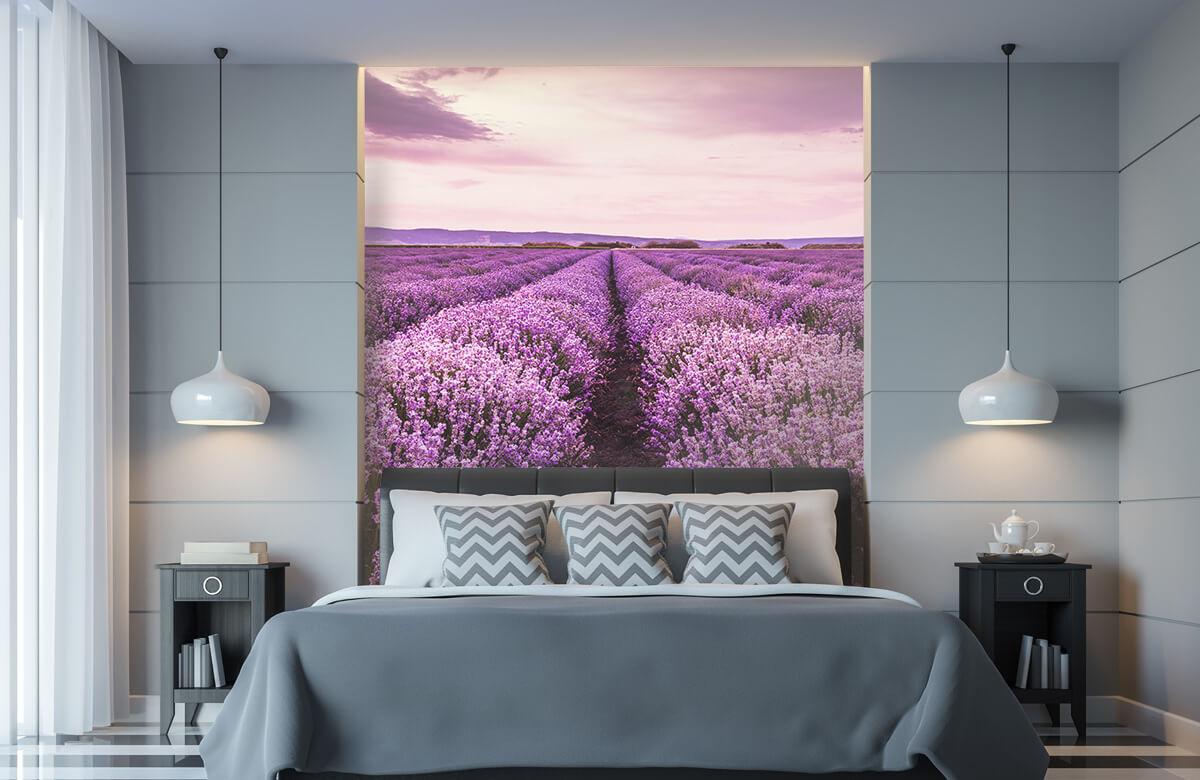 Bloemen, planten en bomen Lavendelstruiken 8