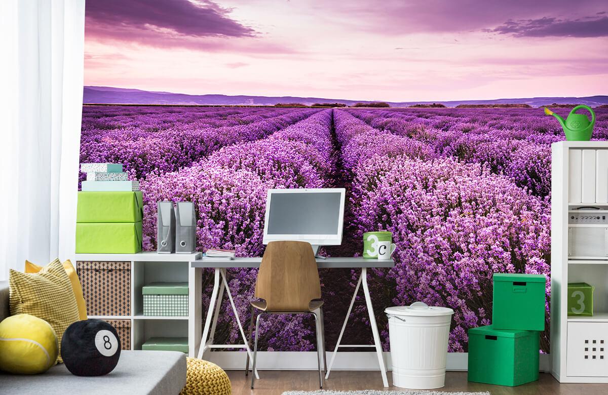 Bloemen, planten en bomen Lavendelstruiken 9