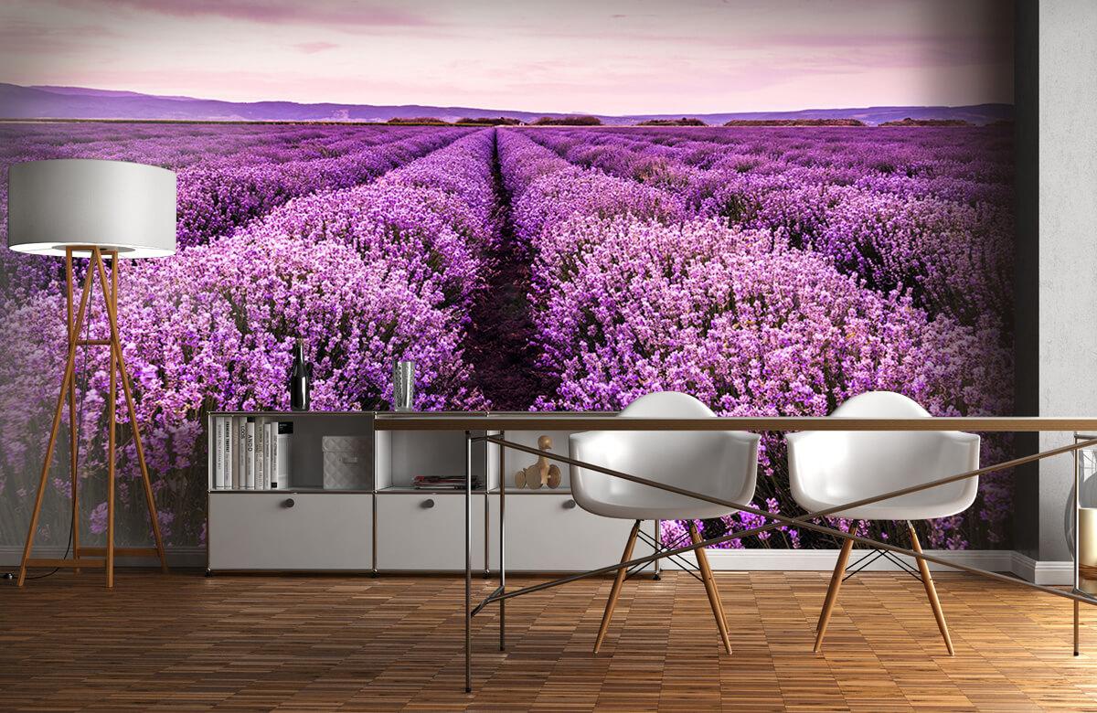 Bloemen, planten en bomen Lavendelstruiken 11