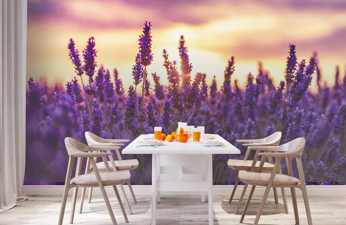 Bloemen, planten en bomen Lavendel bloemen 2