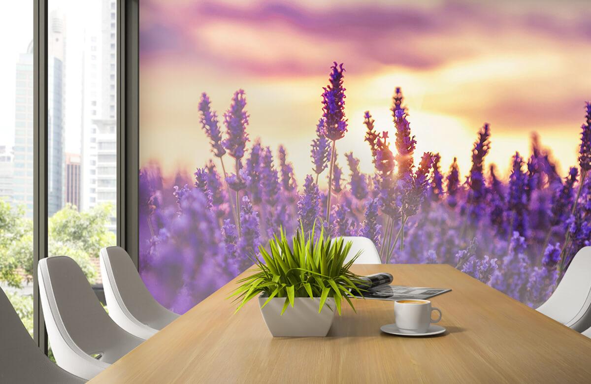 Bloemen, planten en bomen Lavendel bloemen 3