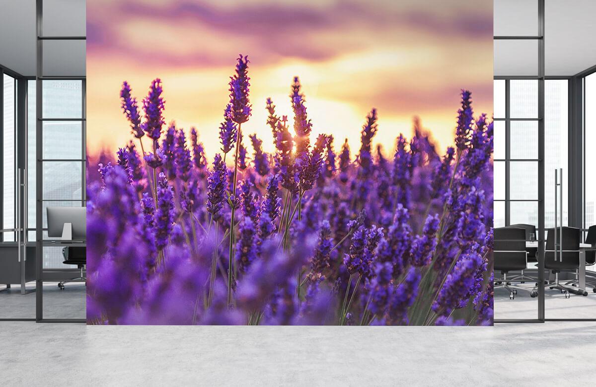Bloemen, planten en bomen Lavendel bloemen 4