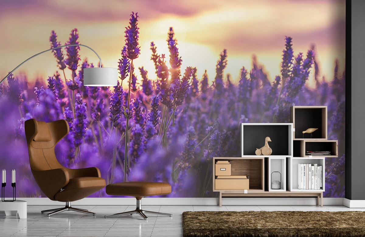 Bloemen, planten en bomen Lavendel bloemen 5
