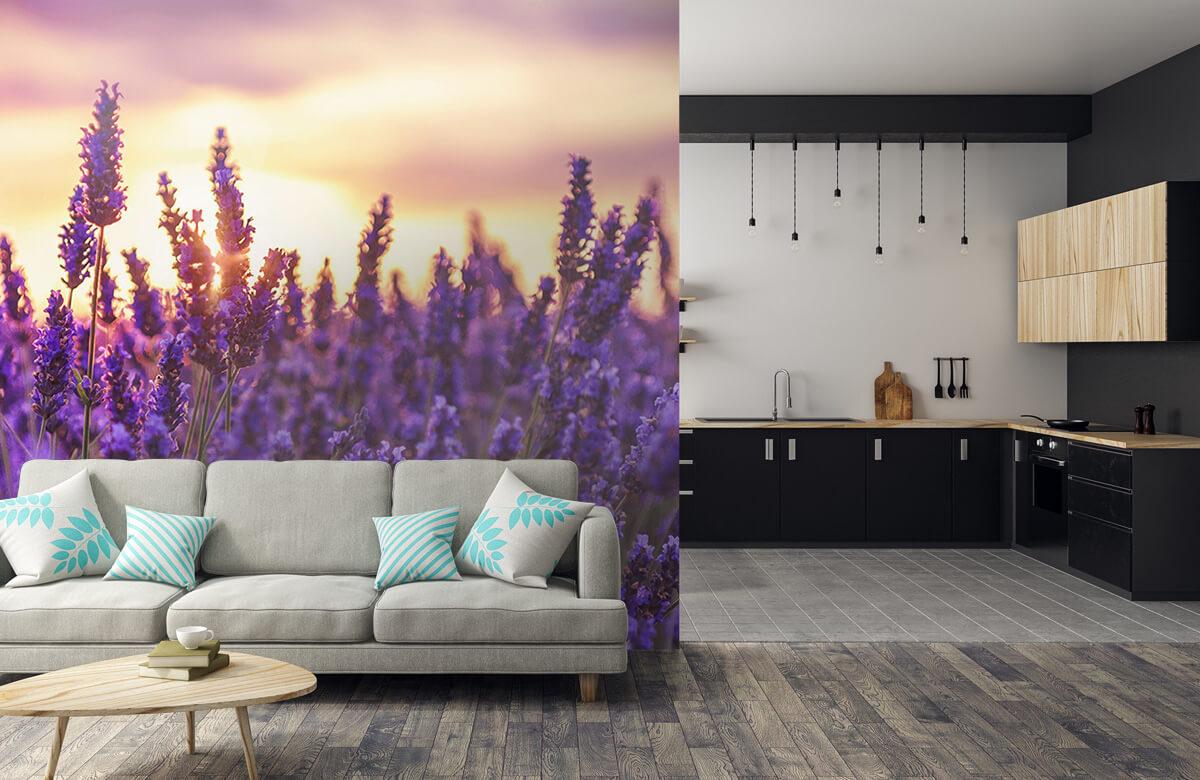 Bloemen, planten en bomen Lavendel bloemen 6