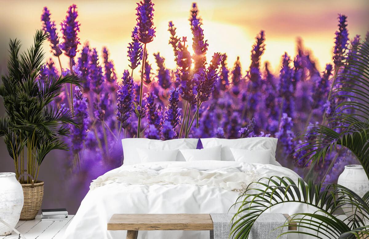 Bloemen, planten en bomen Lavendel bloemen 7