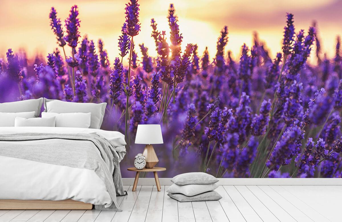 Bloemen, planten en bomen Lavendel bloemen 8
