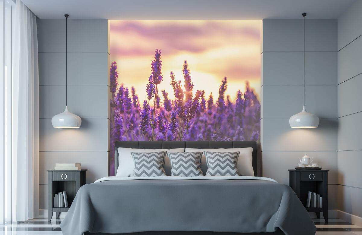 Bloemen, planten en bomen Lavendel bloemen 1
