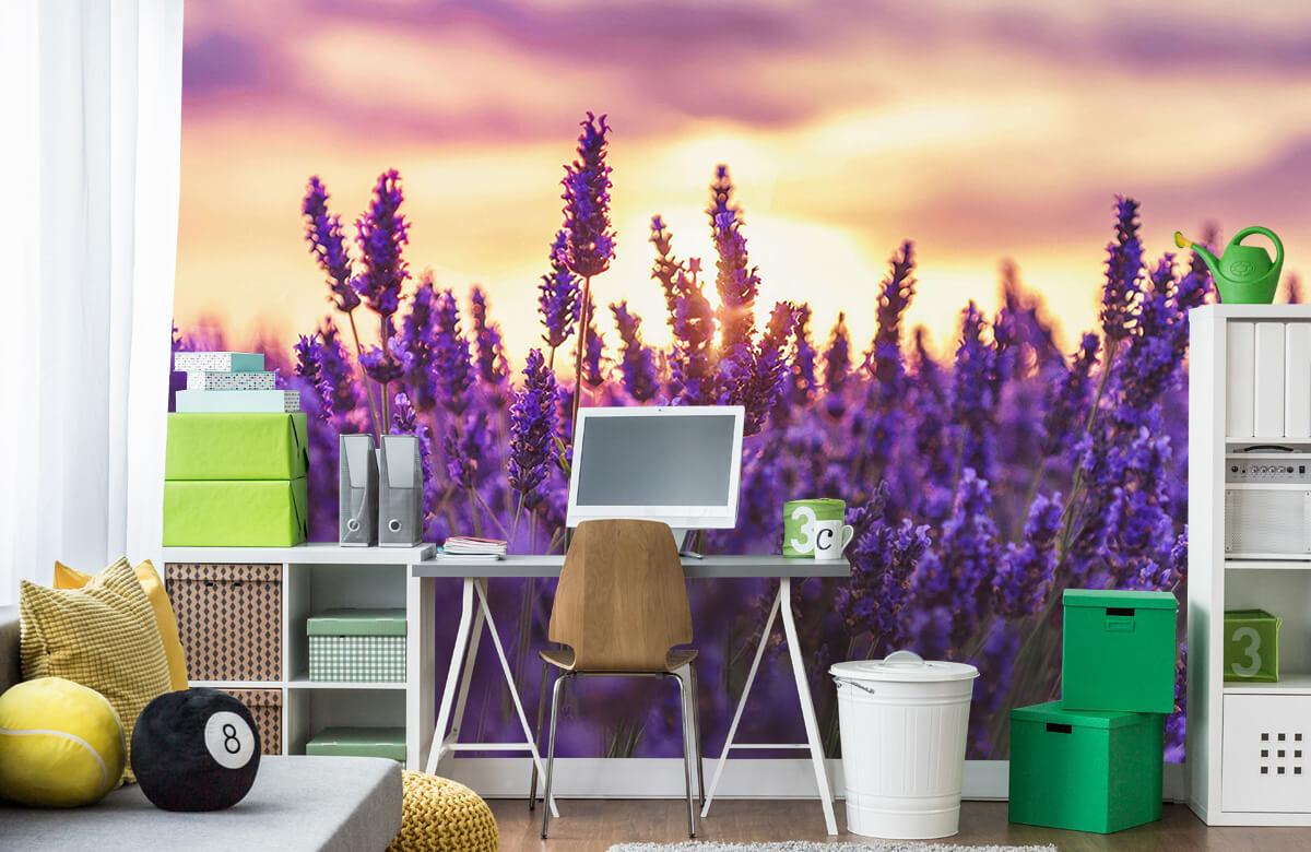 Bloemen, planten en bomen Lavendel bloemen 9