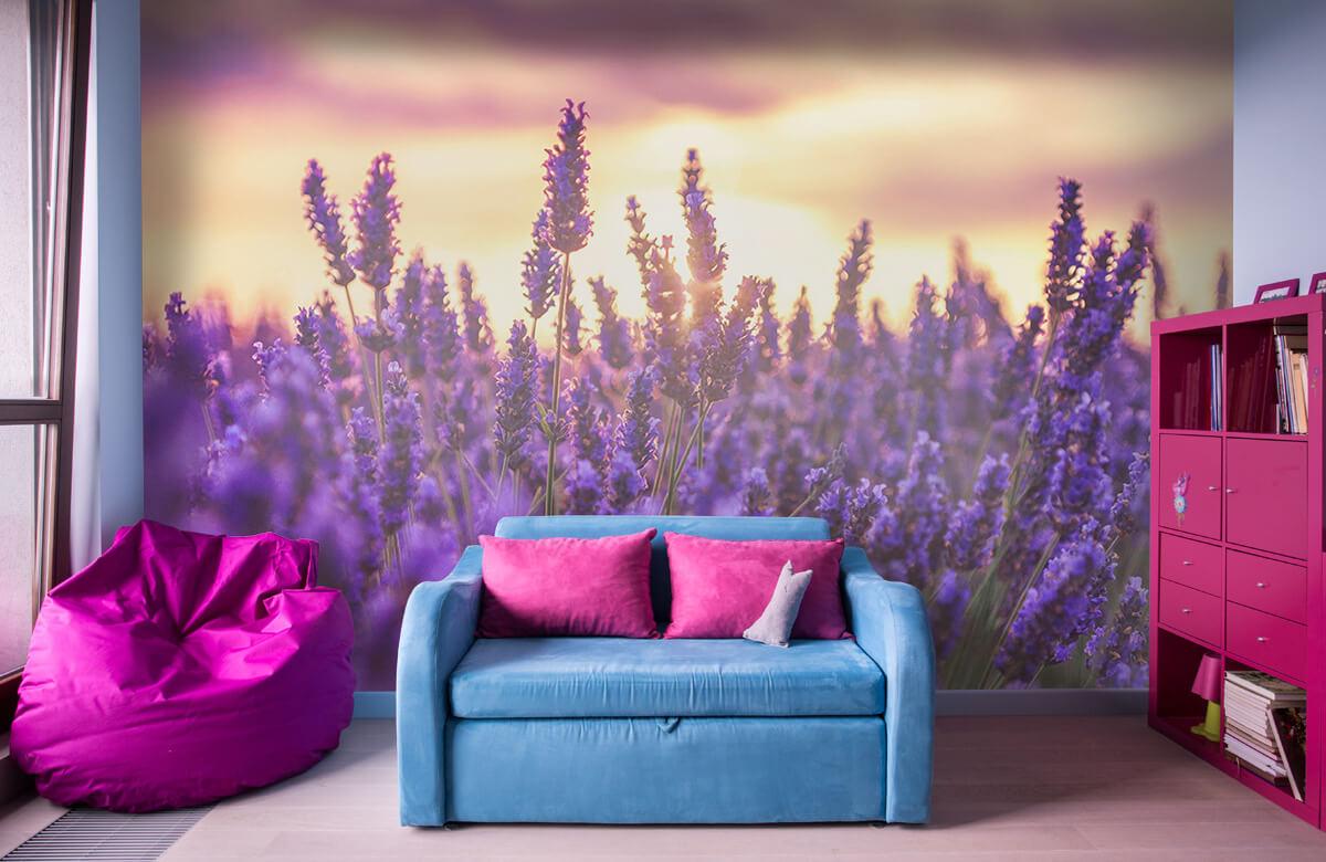 Bloemen, planten en bomen Lavendel bloemen 10
