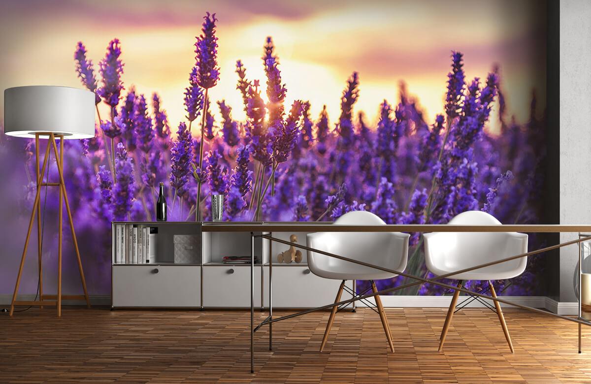 Bloemen, planten en bomen Lavendel bloemen 11