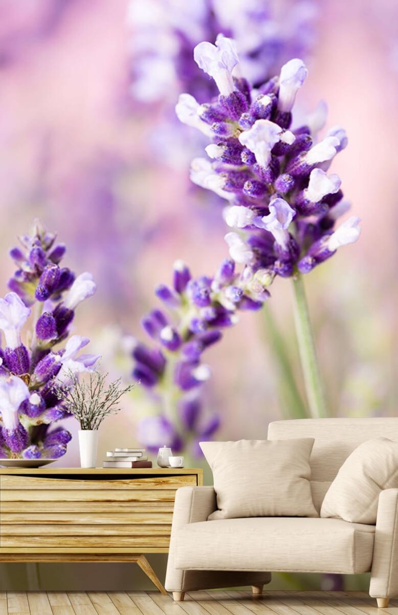 Bloemen, planten en bomen Lavendel bloem 2