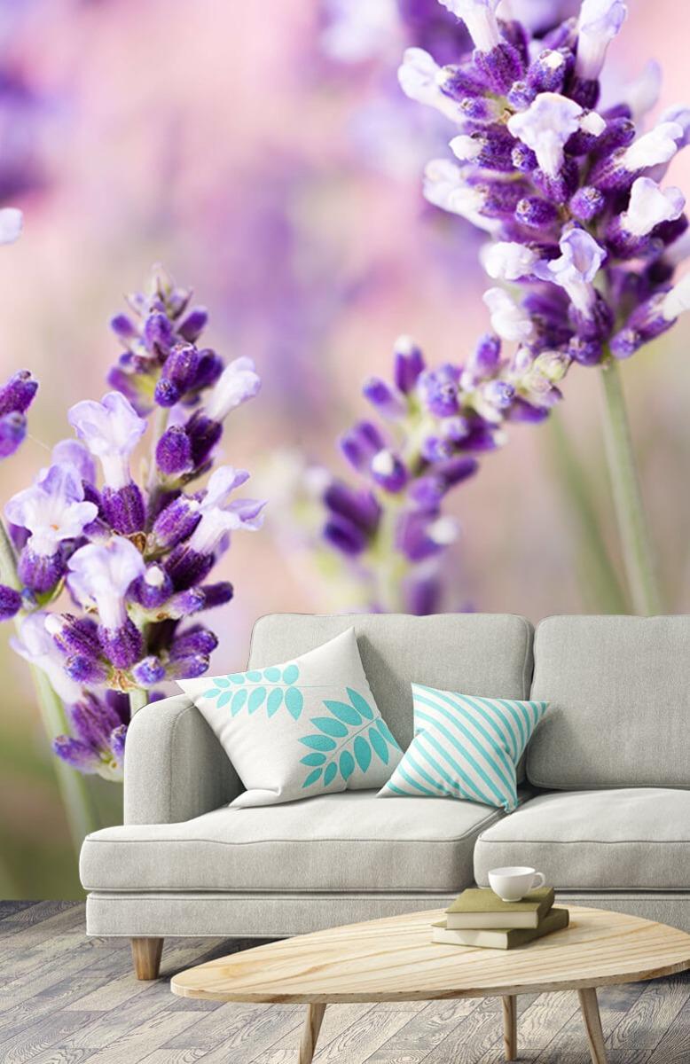 Bloemen, planten en bomen Lavendel bloem 3