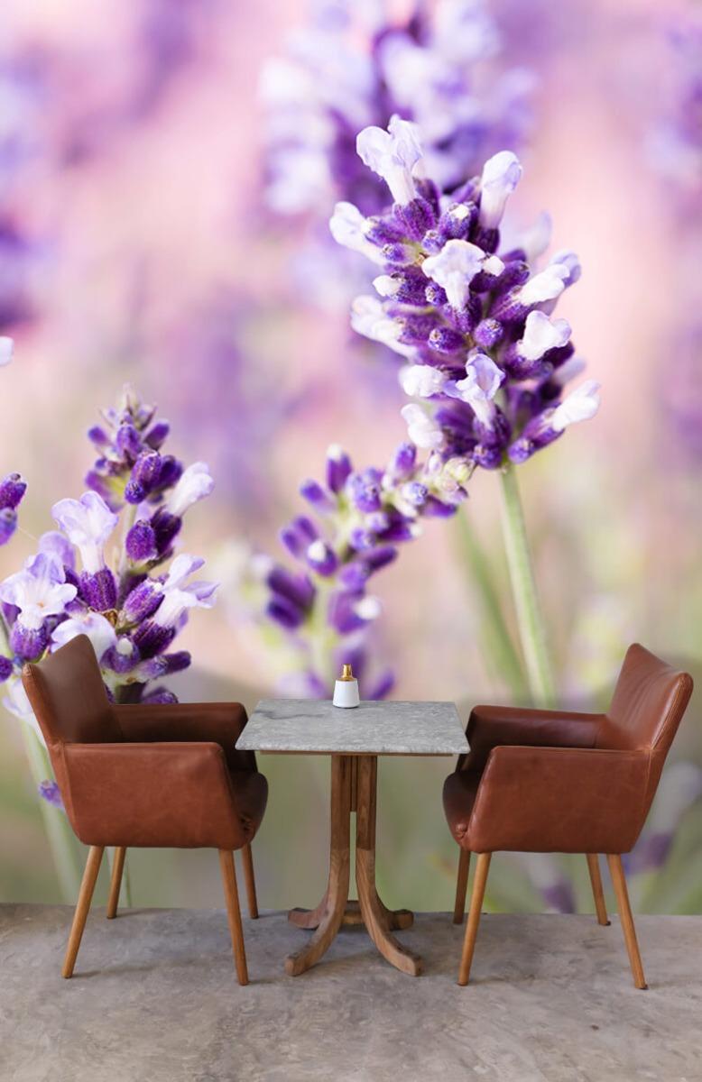 Bloemen, planten en bomen Lavendel bloem 4