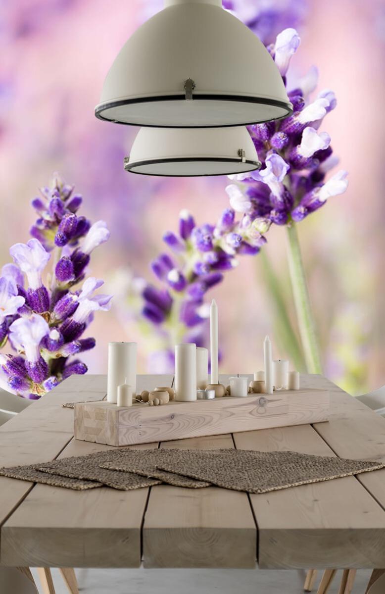 Bloemen, planten en bomen Lavendel bloem 1