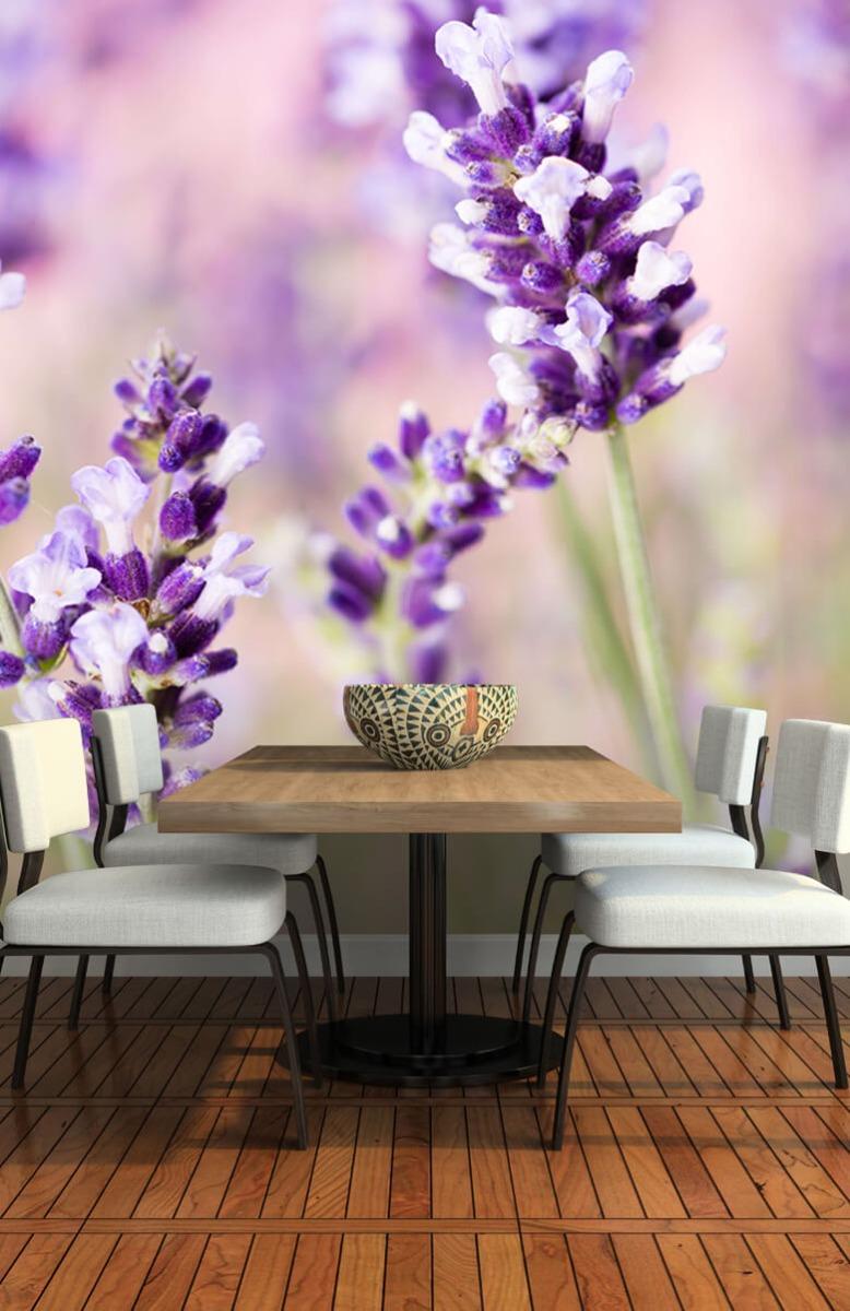 Bloemen, planten en bomen Lavendel bloem 5