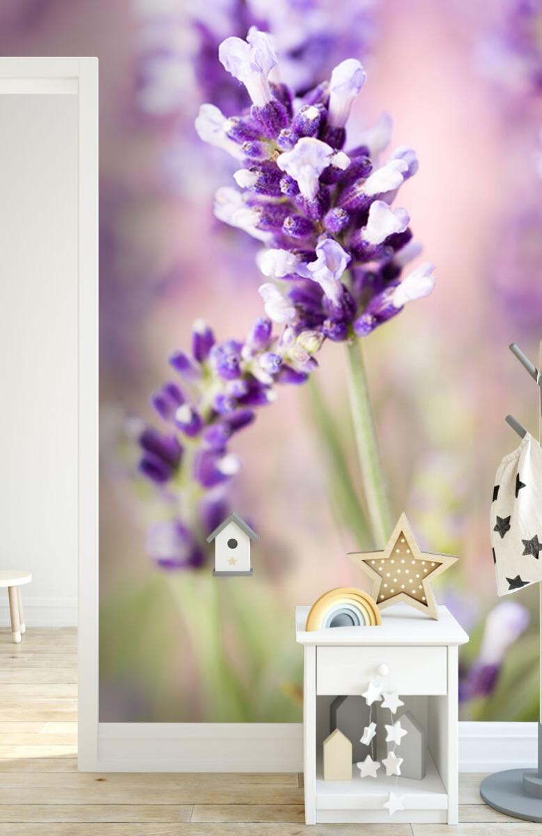 Bloemen, planten en bomen Lavendel bloem 6