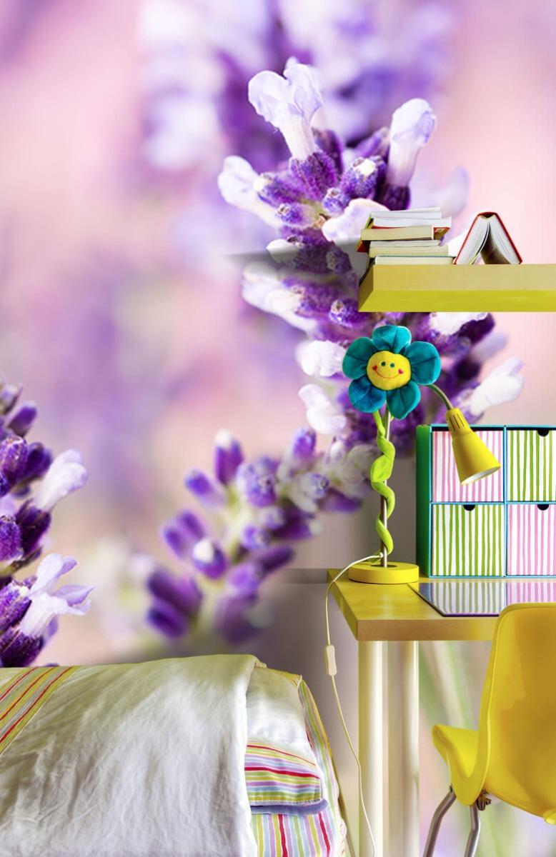 Bloemen, planten en bomen Lavendel bloem 7